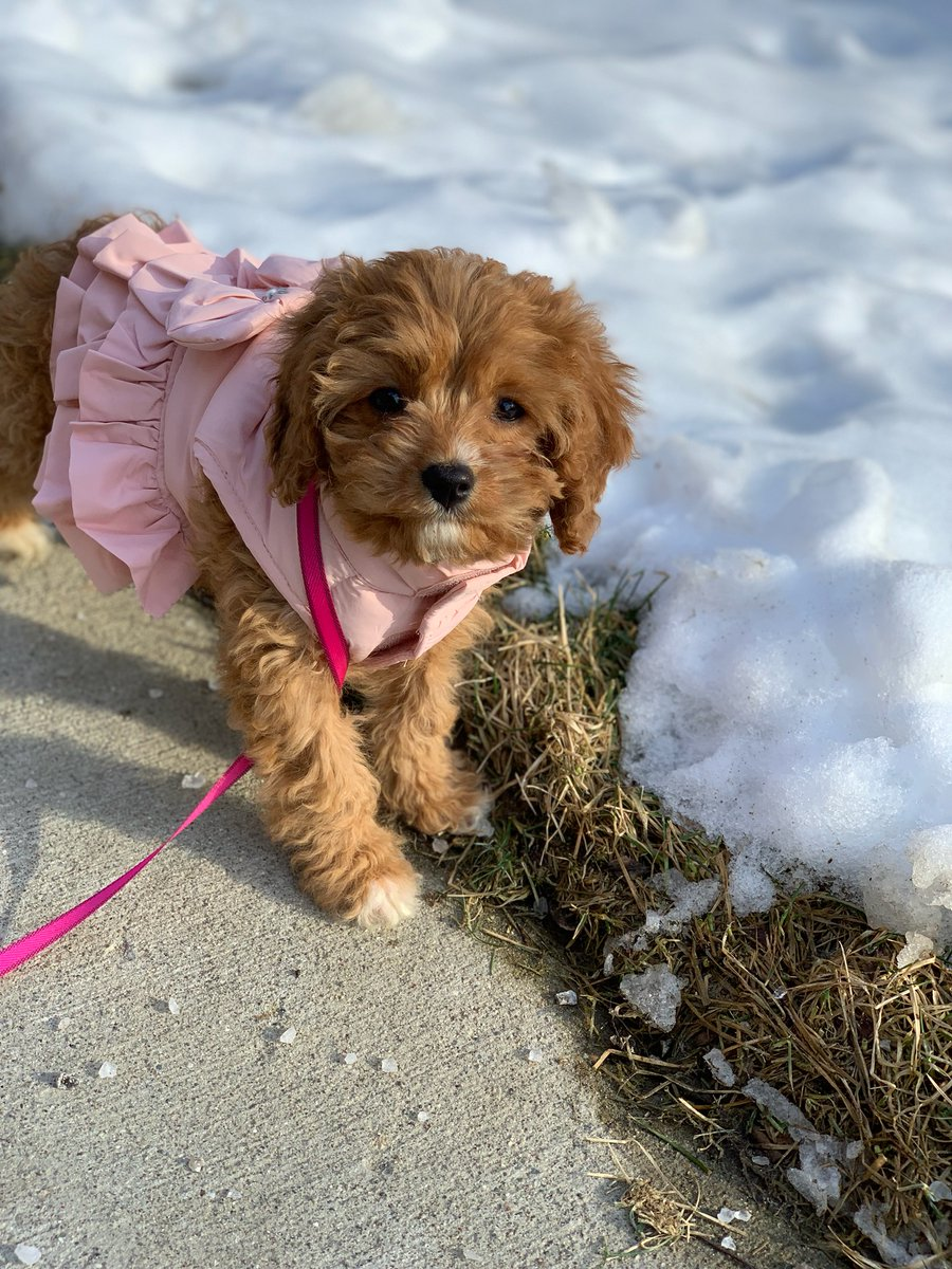 Only been a week with this little pup but Maddy is a joy and handful #LoveYourPetDay<br>http://pic.twitter.com/V1C06Ddvw5