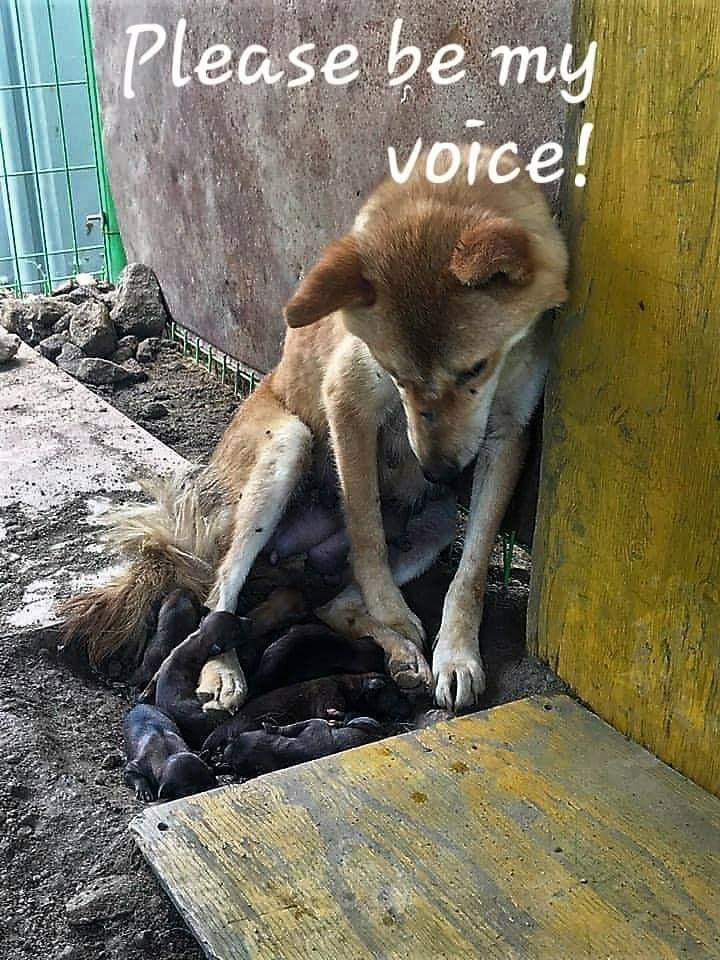 Please #Cosponsor #HConRes71 urging all nations to outlaw the dog cat meat trade and to create and enforce any existing laws against the trade. Not only are a lot of these dogs and cats stolen family members but many will be intentionally torture before killed. Thank youpic.twitter.com/YhK45aIuFU