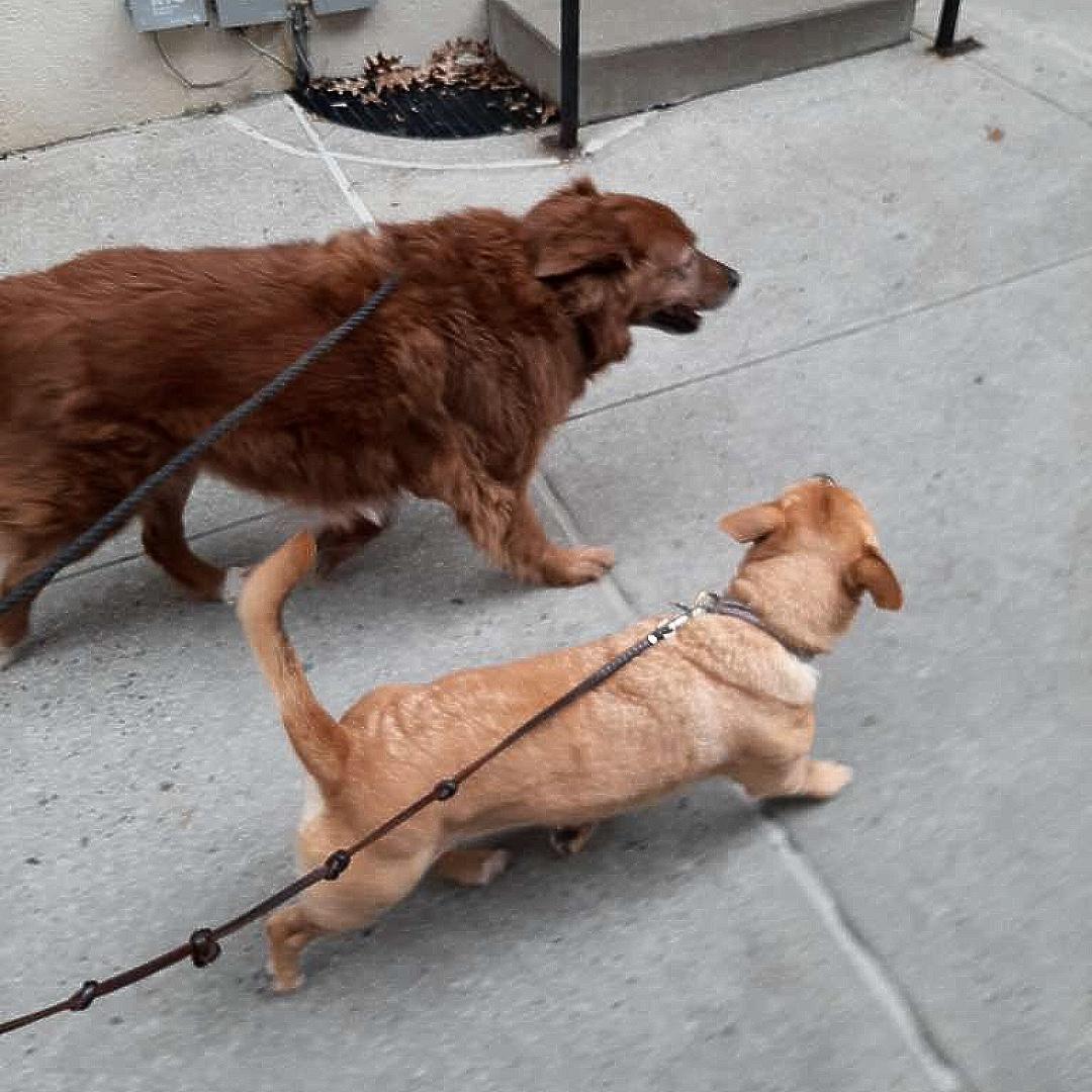 Cherie & Heidi wish you a happy end of the day! #bestfriends #maythepawsbewithyou #lukedogwalker #dogwalkeruws #happydog #uws #doggy #doggo #furbaby #dogcity  #puppy #puppylover #ilovedogs #sweet #whatabeauty #nycitydog #sweetdoggo #endoftheday #cutedog #cutepic #dogsofinstagrampic.twitter.com/VS4O4WGuj2