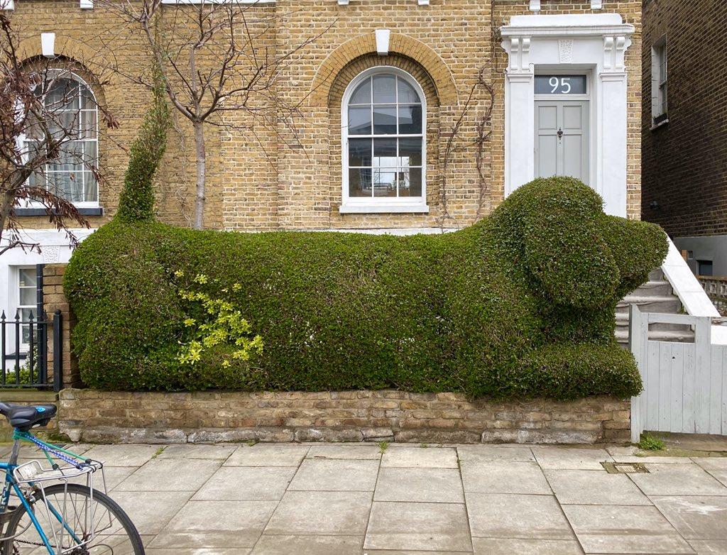 Replying to @scyrene: Best hedge ever.