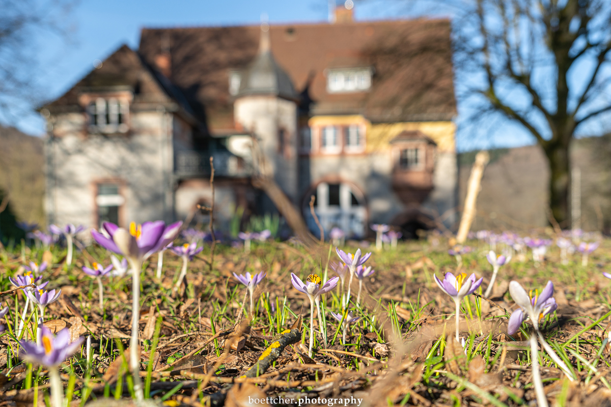 One more picture of Villa Menzer in Neckargemünd#Neckargemünd #RheinNeckarKreis #Neckartal #BadenWürttemberg #Deutschland #Germany #VillaMenzer #MenzerPark #Februar #February #photography #Fotografie #Spring #Frühling #Krokusse #Crocuses #flowers #Blumen #nature #Natur pic.twitter.com/vbt2GB2IXT