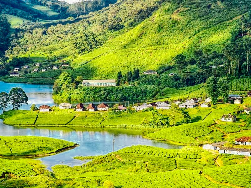 A beautiful image from #Munnar. #Kerala, You will definitely fell in love with this amazing place.  #munnardairies #munnartrip #kerala  #keralaattraction #honeymoontour #honeymooners #photography #photographylovers For Best Packages for Kerala  connect on +91 8130677933pic.twitter.com/CuZHVyq3gW