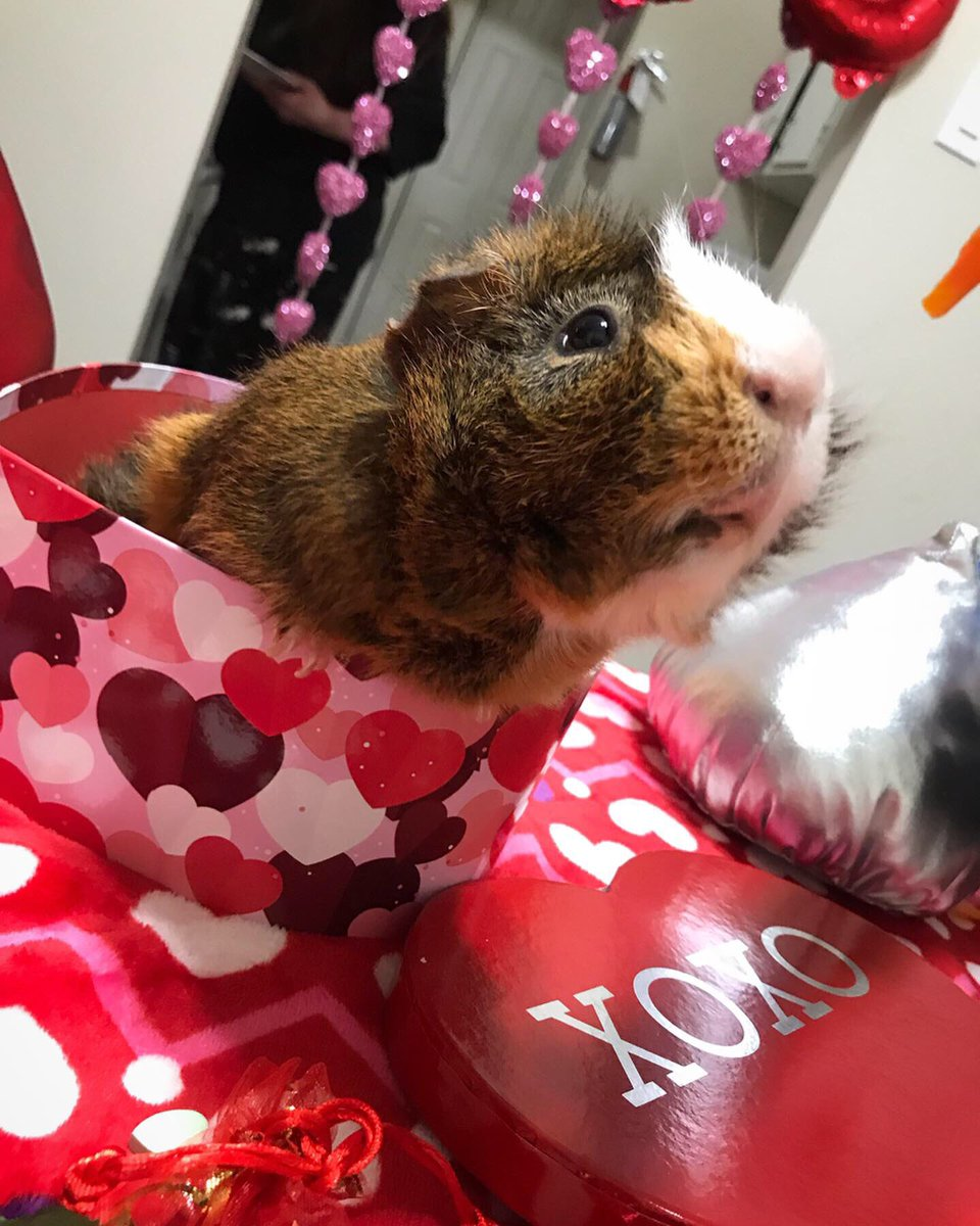 Valentines Day with my little love and my mom ❤️🐹💋 #ValentinesDay2020 #guineapig
