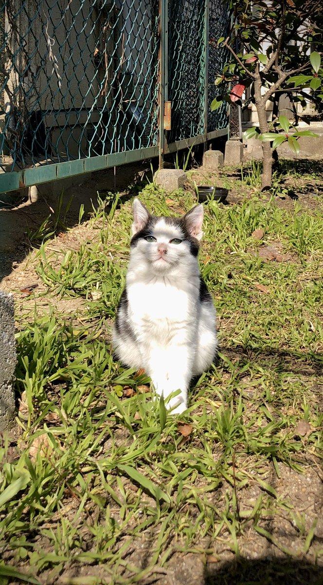 最近見なくて死んだと思ってた子猫が今日しれっと日向ぼっこしてた…‼︎お、おま…っ…お前っ‼︎