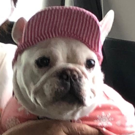 とのこに帽子を被せてみました😁  #帽子  #可愛い  #フレンチブルドッグ  #フレブル