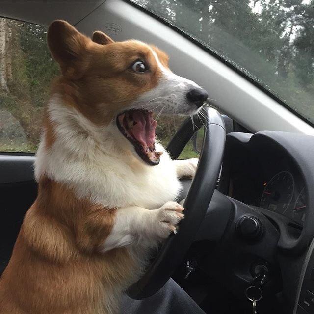 飼い主を轢いたっぽいイッヌ