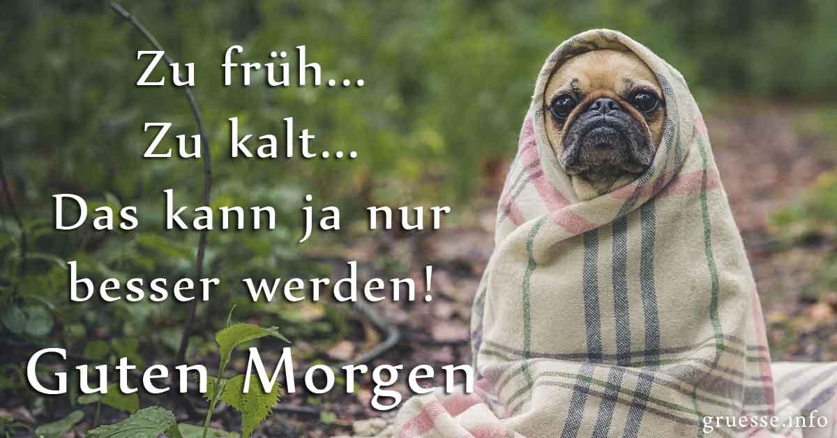 Zu früh ... Zu kalt ... Das kann ja nur besser werden!  #GutenMorgen  #MorningMotivation #Mindset #positivemindset #Hund #PositiveThoughts #Morgenmuffelpic.twitter.com/HTfBZliFQF