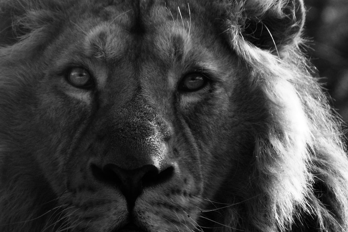 The eyes are the window to the soul #zoophotography #naturephotography #naturelovers #natureofourworld #blackandwhitephotography #photographypic.twitter.com/DHmolAalRC