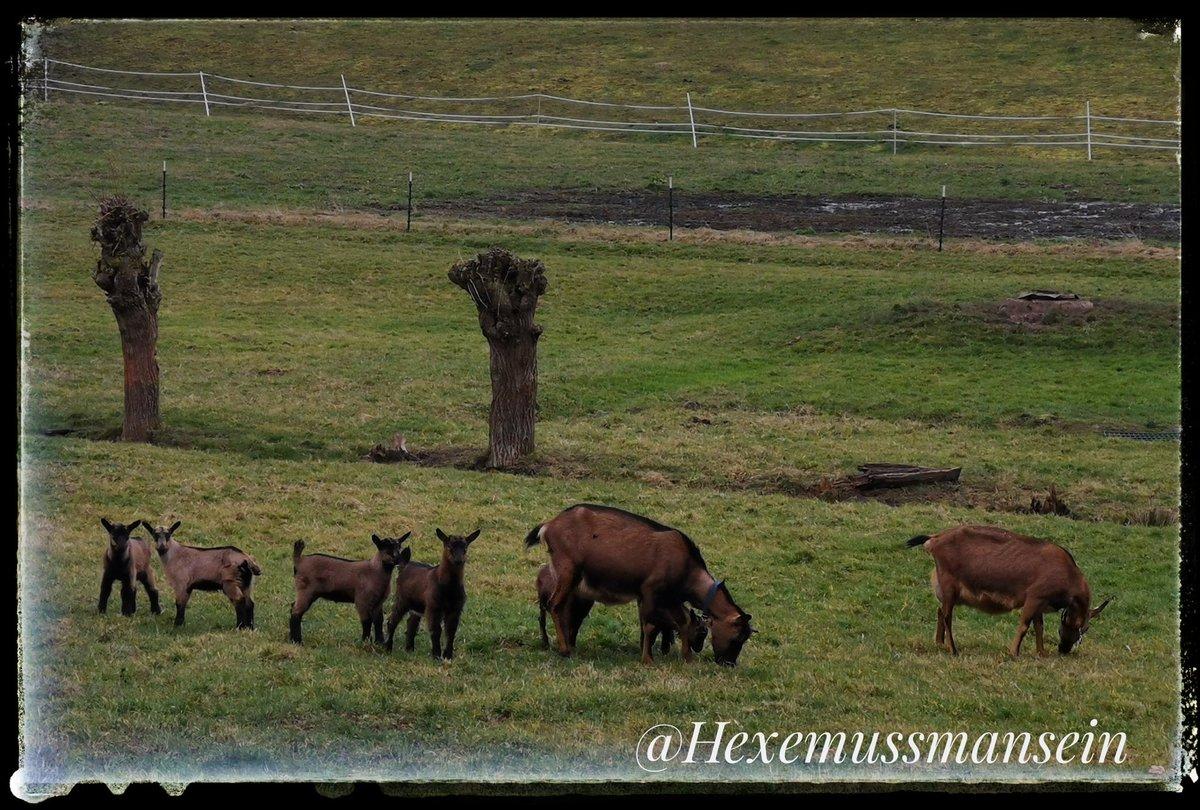 Familienfrühstück #Hunderunde #Natur #Ziegenpic.twitter.com/3DXamh2dN6