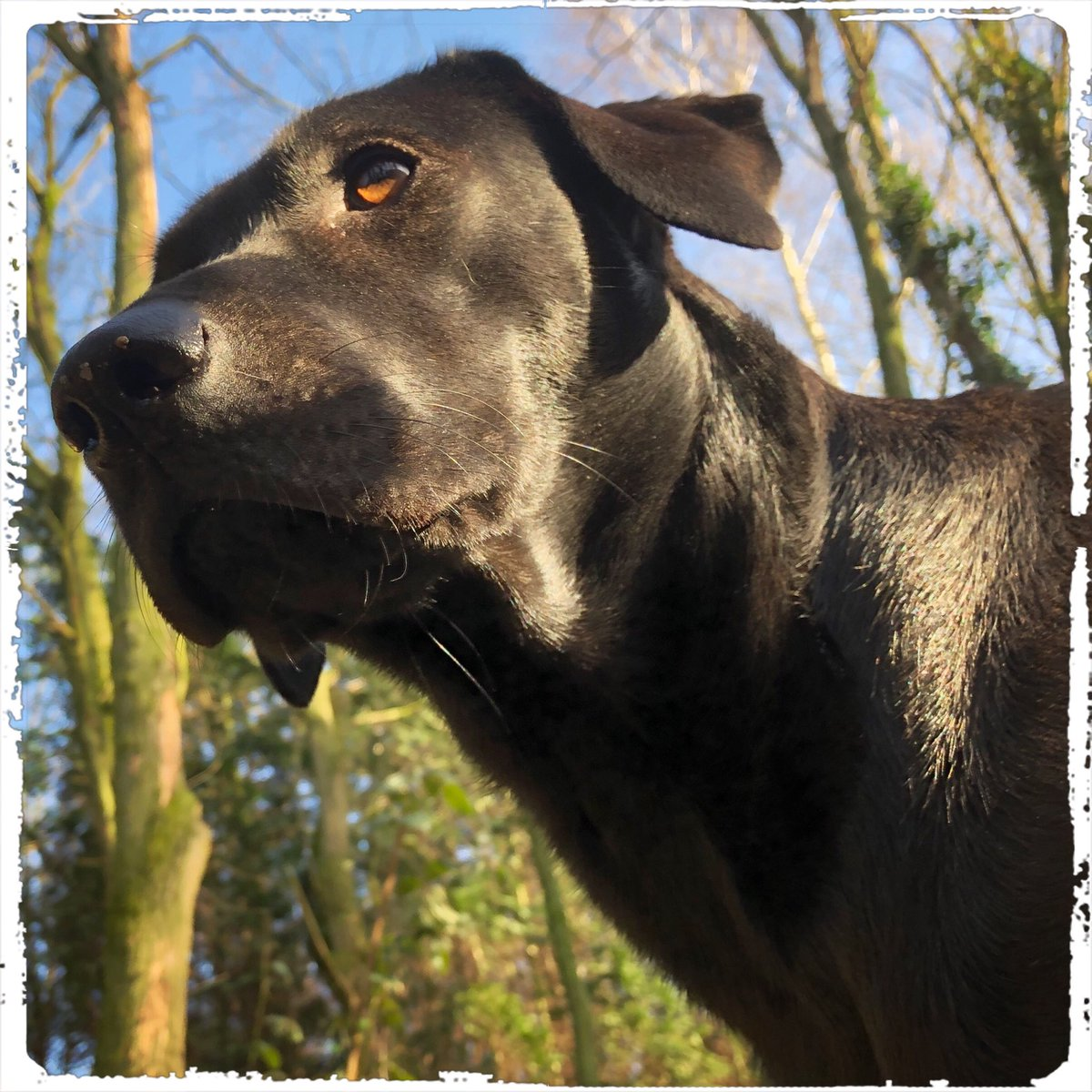 It's Marley on #happyfriday  .  #doglover #ilovemydog #instadog  #meinhund #dogs_of_world #dogsearth #hund #dog #dogislove #trustrespectlove #hundeland #hundeblog #lieblingshund #lebenmithund #fellnase  #besterhund #dogsneeddogs #doggy #dogs #hundefreundschaft #besterhundpic.twitter.com/RtKiCYPeXM