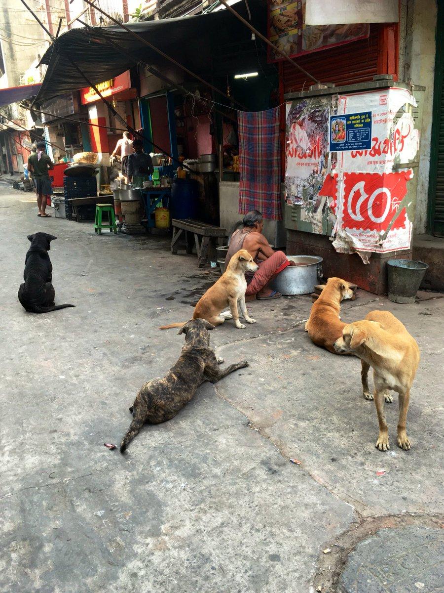犬好き、猫好き、山羊好きさんへ。 https://t.co/FS7e7BUMKJ