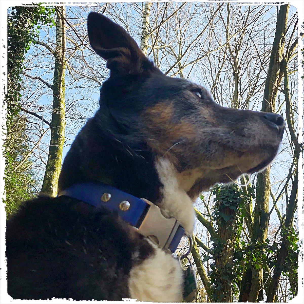 It's Malou on #happyfriday  .  #doglover #ilovemydog #instadog  #meinhund #dogs_of_world #dogsearth #puppies #hund #hundeliebe #hundeschule #dog #dogislove #trustrespectlove #hundeland #hundeblog #lieblingshund #fellnase  #besterhund #dogsneeddogs #doggy #dogs #besterhundpic.twitter.com/GE0AfSW94E