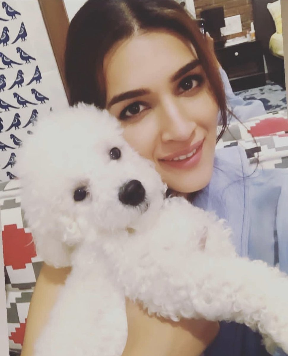 It's #LoveYourPetDay  Hello cutie pie DiscoSanon & PhoebeSanon ... the awwdorable duo of @kritisanon & @NupurSanon They both r damn cute & naughty and love all the videos of them  Puppy Phoebe  did u grow pic.twitter.com/YMPDazCPjT