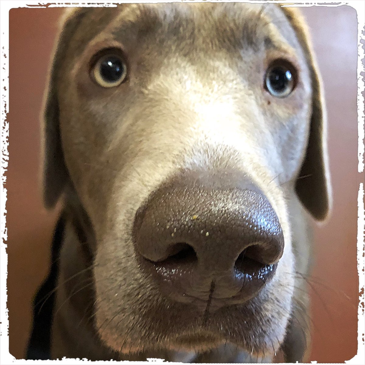 It's Fiona on #happyfriday  .  #doglover #ilovemydog #instadog  #meinhund #dogs_of_world #dogsearth #puppies #hund #hundeliebe #hundeleben #dog #dogislove #trustrespectlove #hundeland #hundeblog #lieblingshund #lebenmithund  #besterhund #dogsneeddogs #doggy #dogs #besterhundpic.twitter.com/KSEvYhj2Dk