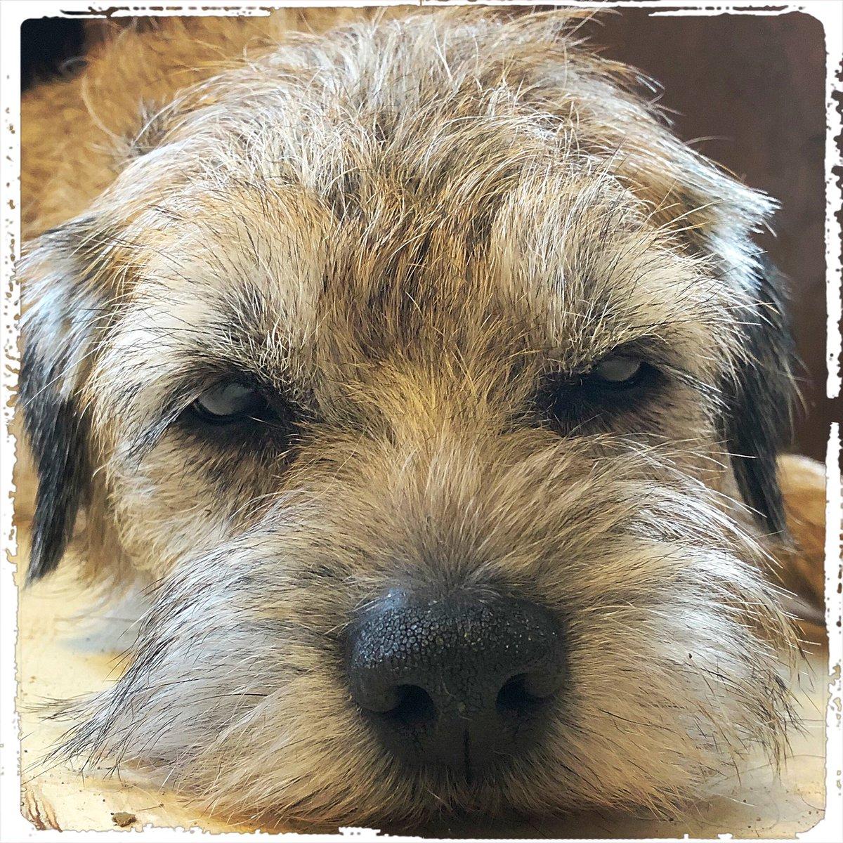 It's Jonny on #happyfriday  .  #doglover #ilovemydog #instadog  #meinhund #dogs_of_world #dogsearth #puppies #hund #hundeliebe #dog #dogislove #trustrespectlove #hundeland #hundeblog #lieblingshund #lebenmithund #fellnase  #besterhund #dogsneeddogs #doggy #dogs #besterhundpic.twitter.com/g4fgC9DX3d