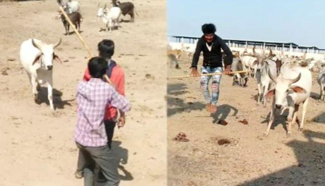'#எரிமலை எப்படி #பொறுக்கும்!'..  #எஜமானரைத் தாக்க வருபவர்களை நோக்கி '#பசு மாடு' செய்யும் '#விநோத' காரியம்!    #cow #Viral