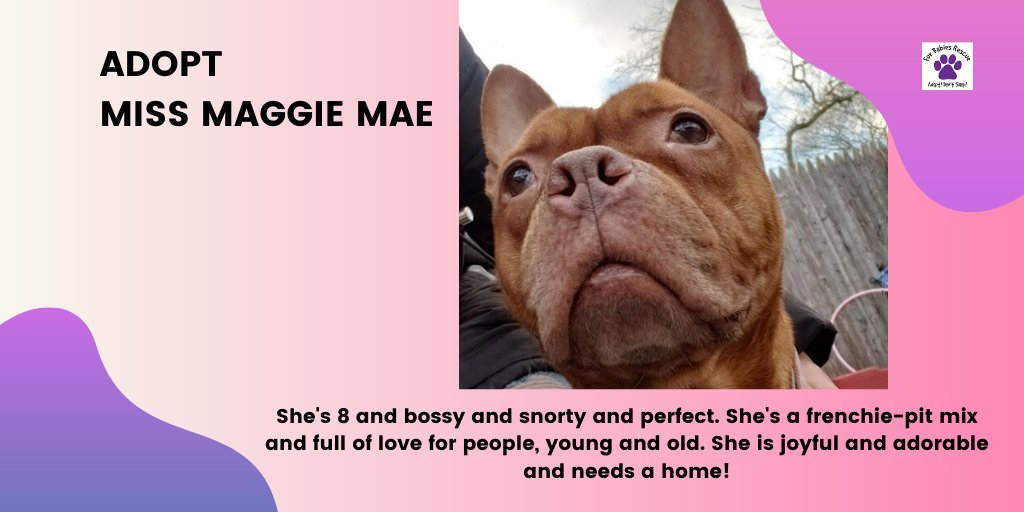 Please share Maggie Mae so she can find her home!