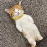 寝顔、寝相ともに可愛すぎる!見てるだけで頬が弛んじゃう猫の画像!