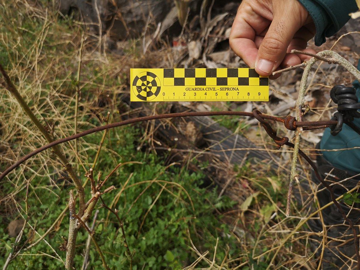 La Guardia Civil investiga a dos personas acusadas de colocar 43 lazos prohibidos para cazar en #LaGomera https://bit.ly/3bVOH6e   @OPC_GCivilpic.twitter.com/RMqAJvzsqQ