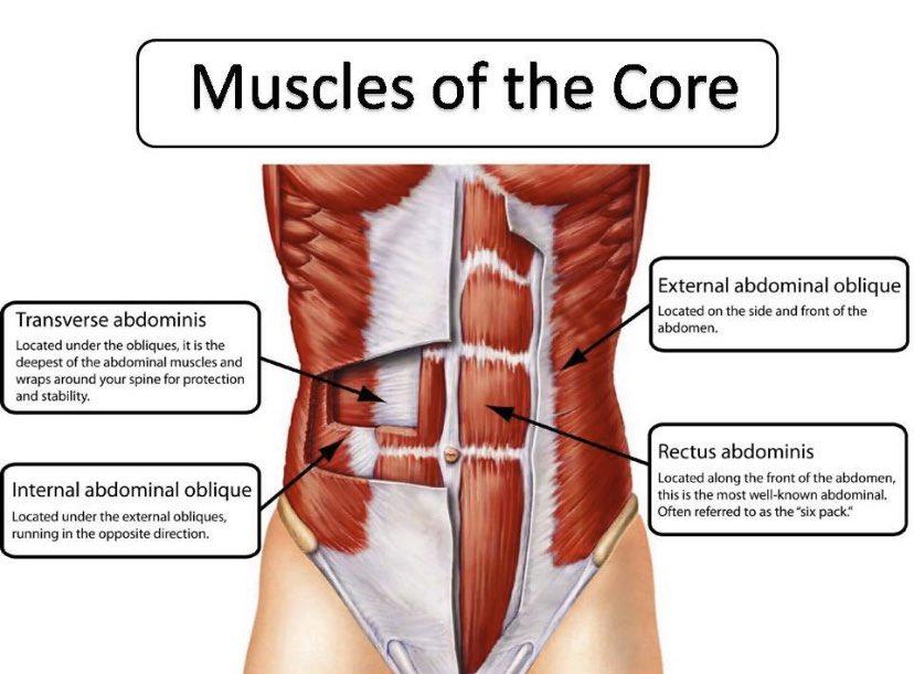 Do you know your core?   #KitPilatesPro #PilatesEducation #Pilates #adoreyourcore #flexibilitystrengthendurance #knowyourbody #health #fitness #wellness #painfreelife #breathislife #COpilatesguild #pilatesforlife #anatomypic.twitter.com/PALNcPgVTW