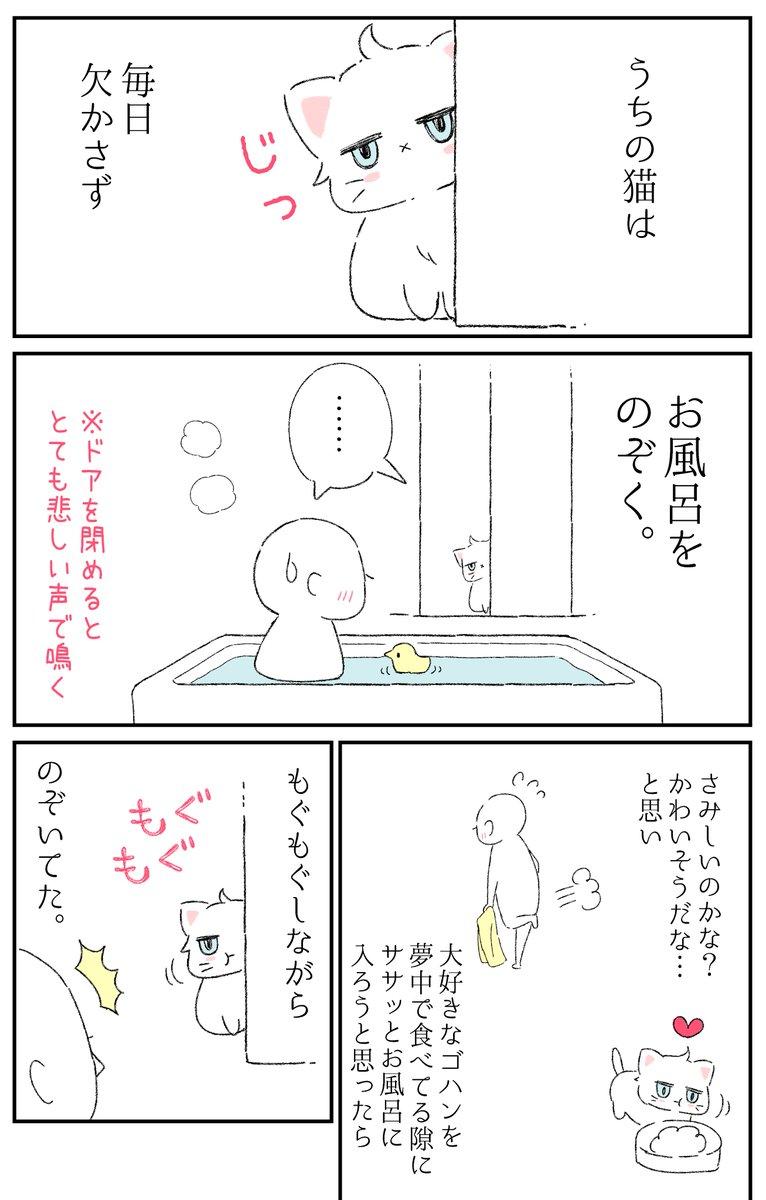 「君がお風呂をのぞく理由」#猫の日
