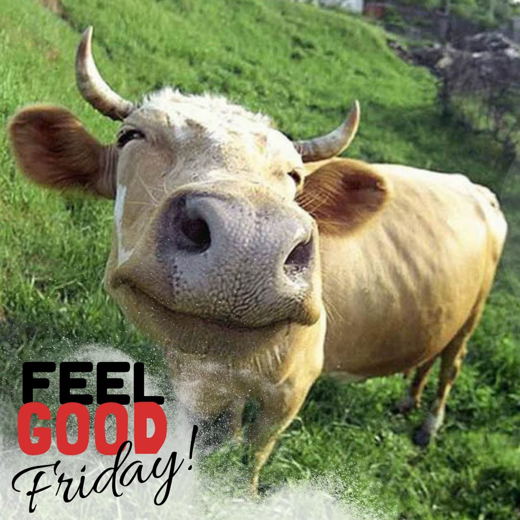 Mooove over weekday... Today is Friday!!!! #tgif, #feelgoodfriday, #roxannejohnstondesigns, #love, #cow, #moo, #love, #animals