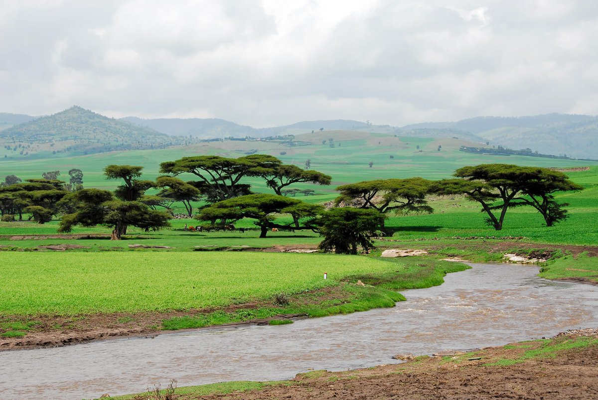 Non-stop from Milan, Italy to Addis Ababa, Ethiopia for only €298 roundtrip. #Travel    Booking link: