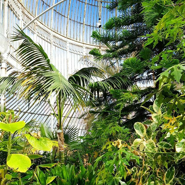 The Palm House, Belfast. ⠀ ⠀ #belfast #northernireland #ireland #belfastcity #discoverireland #irishwanders #insta #ukbloggers #unitedkingdom #discoverni #botanicgardens #photography #nature #flowers #wanderlust #traveler #niceshot #travel #instatrav…
