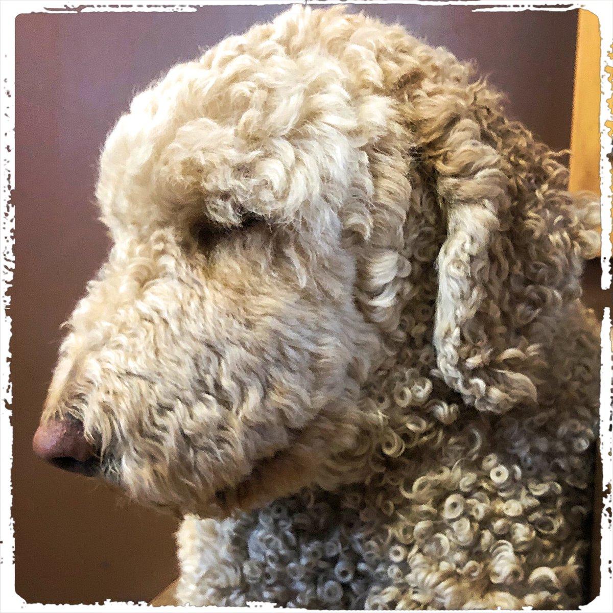 Jaimie wishes you a nice Weekend  .  #doglover #ilovemydog #instadog  #meinhund #dogs_of_world #dogsearth #puppies #hund #hundeliebe #dogislove #trustrespectlove #hundeland #hundeblog #lieblingshund #lebenmithund #fellnase  #besterhund #dogsneeddogs #doggy #dogs #besterhundpic.twitter.com/scSjzAd5Ke