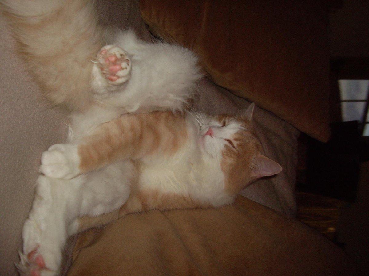 @TheEllenShow @portiaderossi #my Mango and 2much bo😆😆