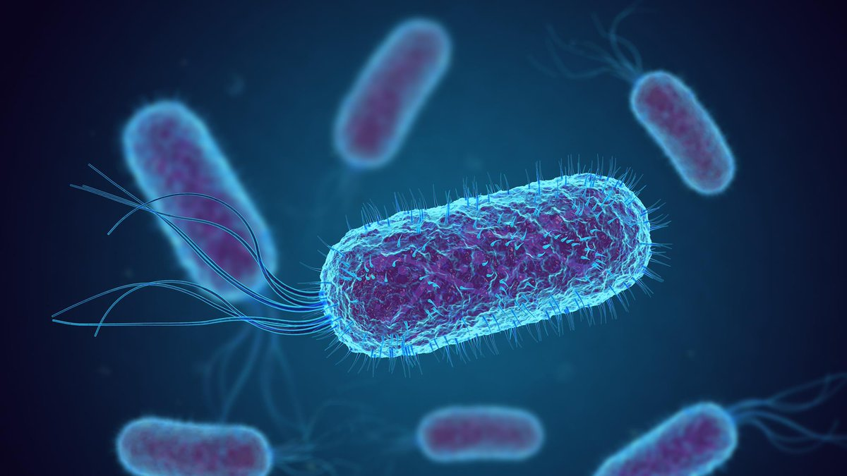 Bacteria has its benefits: Giant, long-lived bacteria could make microbial farms more productive.   https://bit.ly/38hxKRr