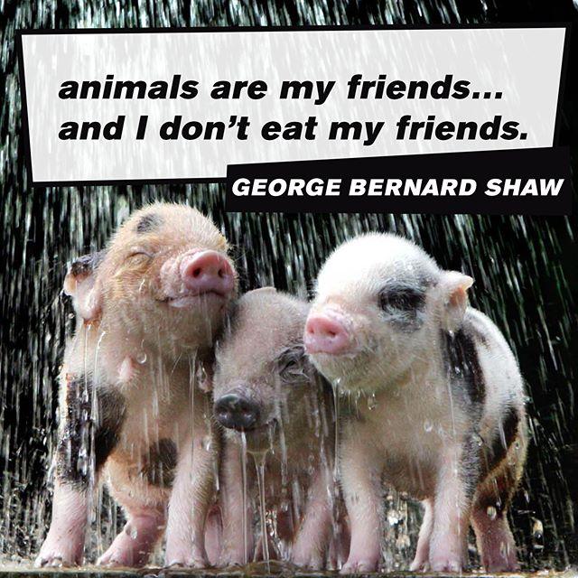 ...right? :) #happyfridayeveryone #fridaymood #itsfriday #fridayvibes #happyfriyay #fridaylove #iloveanimals #animalsarefriends #instaanimals #animalover #loveanimals❤#animalslover #loveanimal #animallovers #animallover…  📸  via