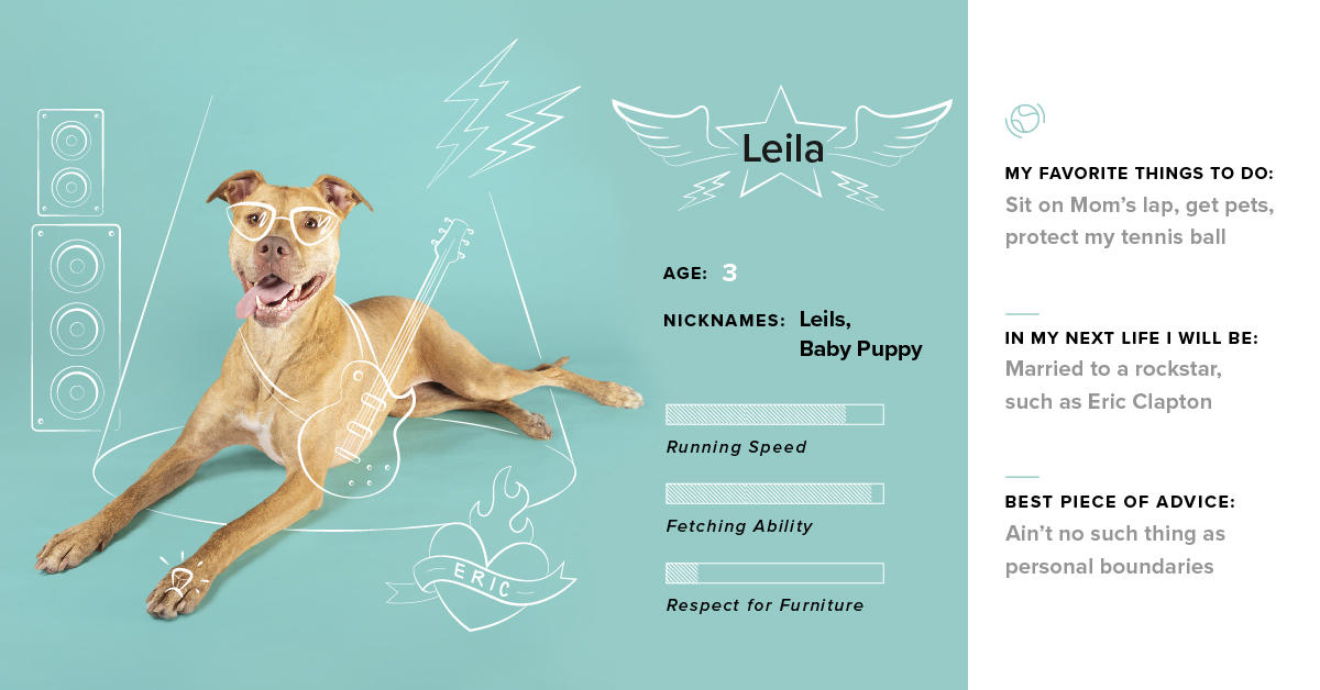 The next TG dog coming to the stage is: Leila! Leila's had plenty of practice strumming at our heartstrings. 🎸 #dogsoftg