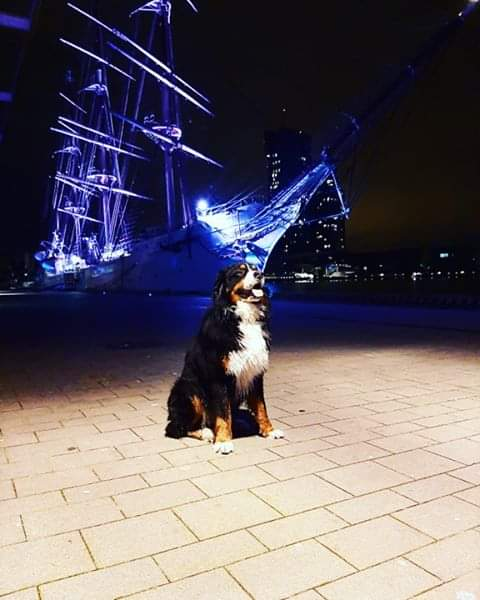 Wieczorny spacer z psem? Polecamy👌 #wGdyni   _______________ Fot. Klaudia Mamel