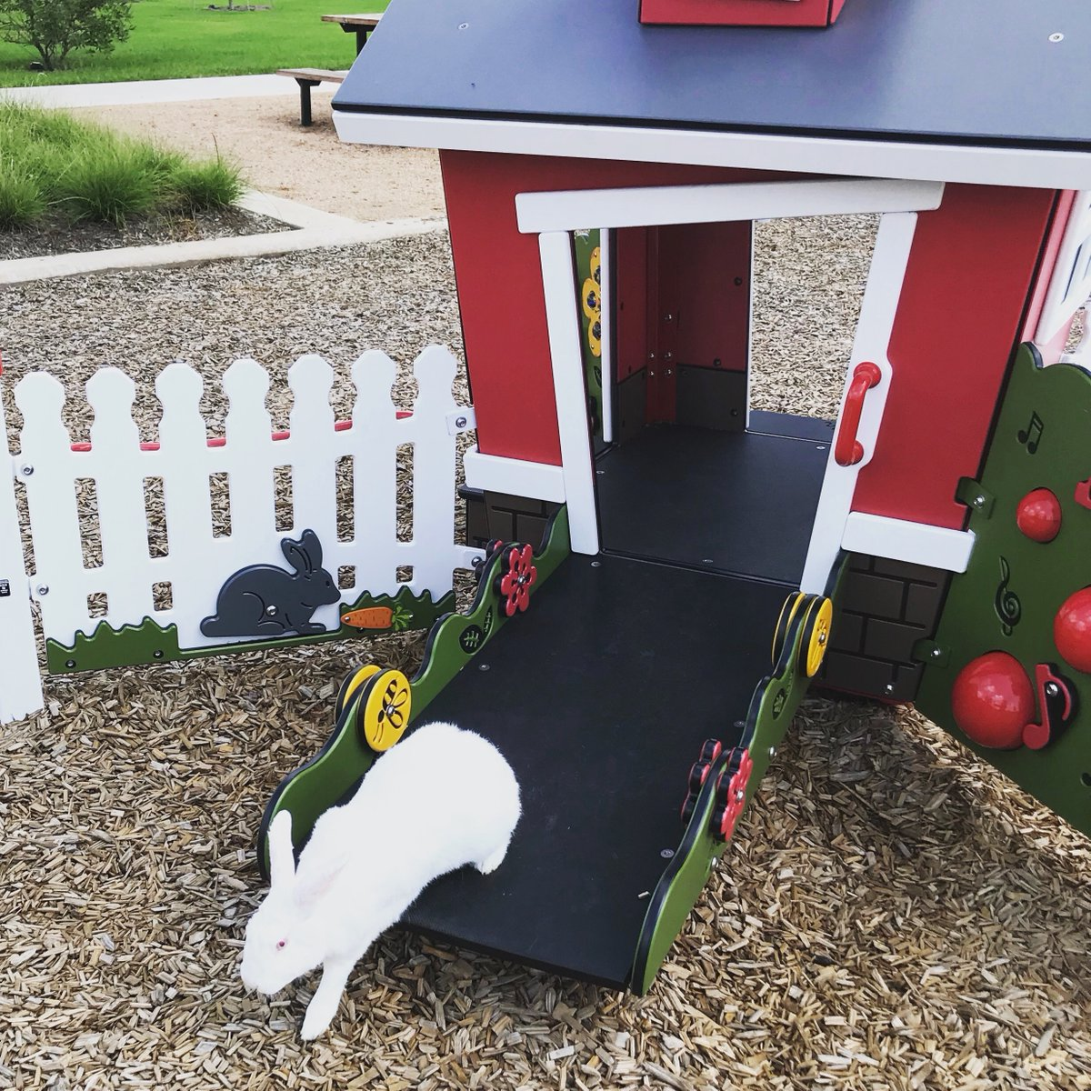Fred is rushing off to work, from his little play house at #HarvestGreen! #houston #rabbit #rabbits #bunny #bunnies #houstonevents #richmondtx #fortbendpic.twitter.com/99yHQRe5jg