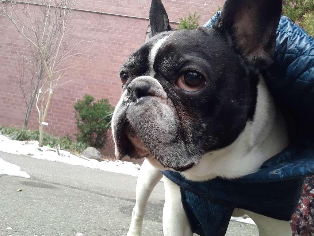 Watson wishes you a happy weekend! #frenchie #friday #maythepawsbewithyou #lukedogwalker #dogwalkeruws #happydog #uws #doggy #doggo #furbaby #dogcity  #puppy #puppylover #ilovedogs #sweet #whatabeauty #nycitydog #sweetdoggo #endoftheday #cutedog #cutepic #dogsofinstagrampic.twitter.com/UeSdAG7UbS