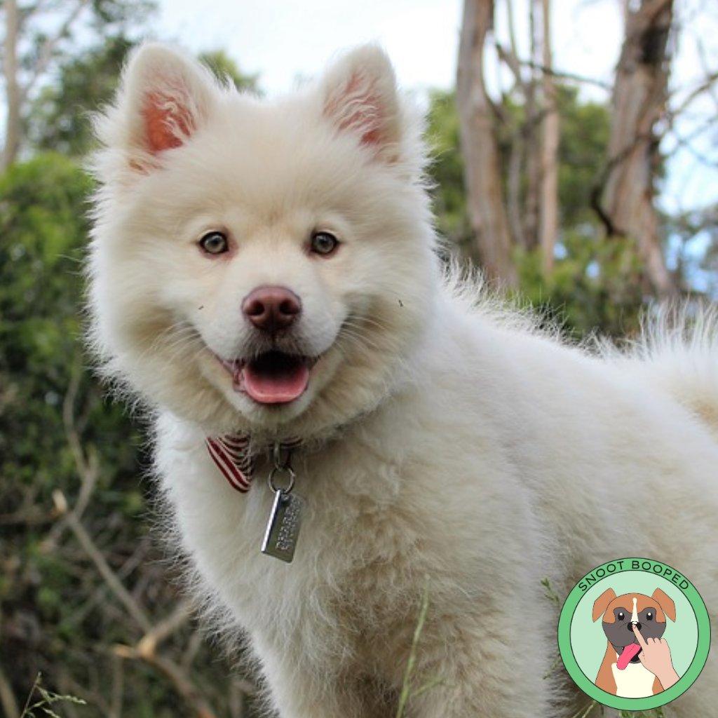 Happy Friday!⠀ 🐾 🐾 #fridaymood #mood #fridayfeeling #happyfriday #snootbooped #boopthesnoot #tgif #fridayfun #happydays #dogoftheday #thoughts #dogmood #dog #dogs #lovelydog #ilovemydogs #mydogismylife #adogslife #cute #dogsrule #snootsrule #respecthtesnoot