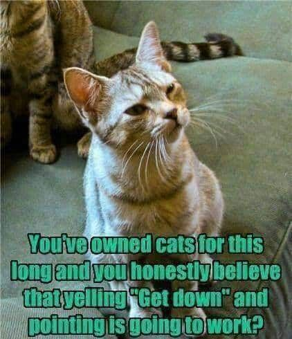 Seriously...=^..^= http://www.kittyprettygifts.com #cats #cute #lolcats #memes #humor #silly #funny #kitty #kittyprettygifts #crazycatlady #catlady #catman #kittens #catgifts #catdad #cathome #home #homedecor