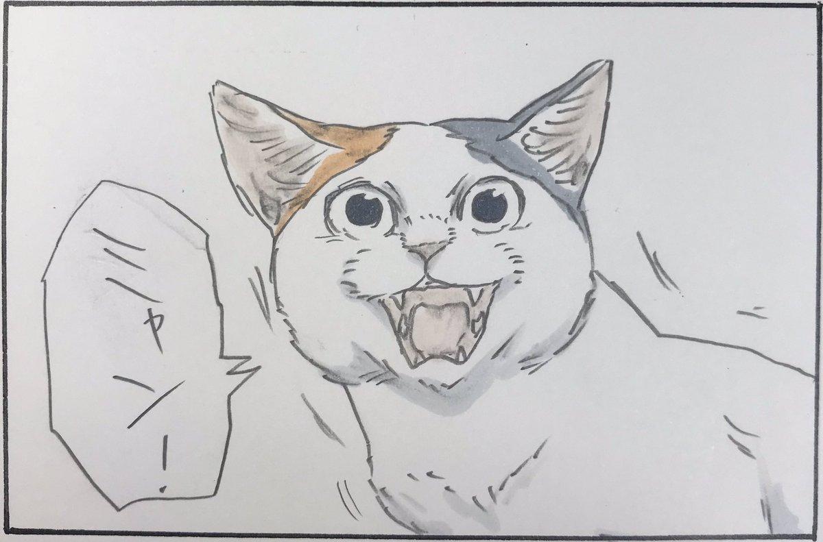 『猫語がわかる人』