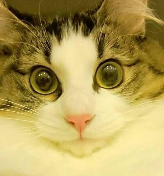 2020年令和2年2月22日猫の日❣️ 世界中の猫たちが幸せになりますように❤️  みんなの猫ちゃん写真見せてください! #猫の日