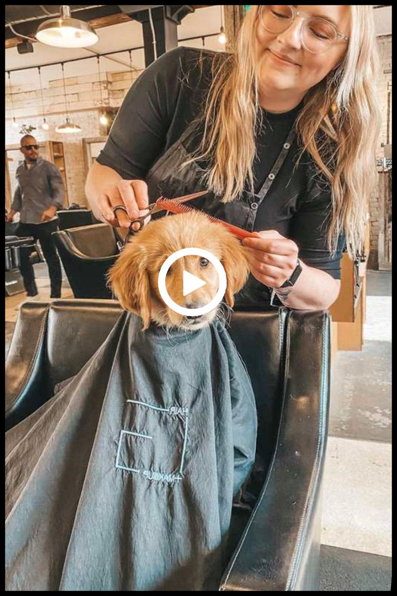 Puppy Visits The Salon And Gets A Hair Treatment With His Mom  #Animals #Pets #Dogs #Cats #Pups #Puppy #AnimalsLover #PetCare #PetHouse #PetStories #AnimalStories #InterestingDog #FunnyDog #CuteDog #Salon #HairTreatment #Mom #Luveurpet