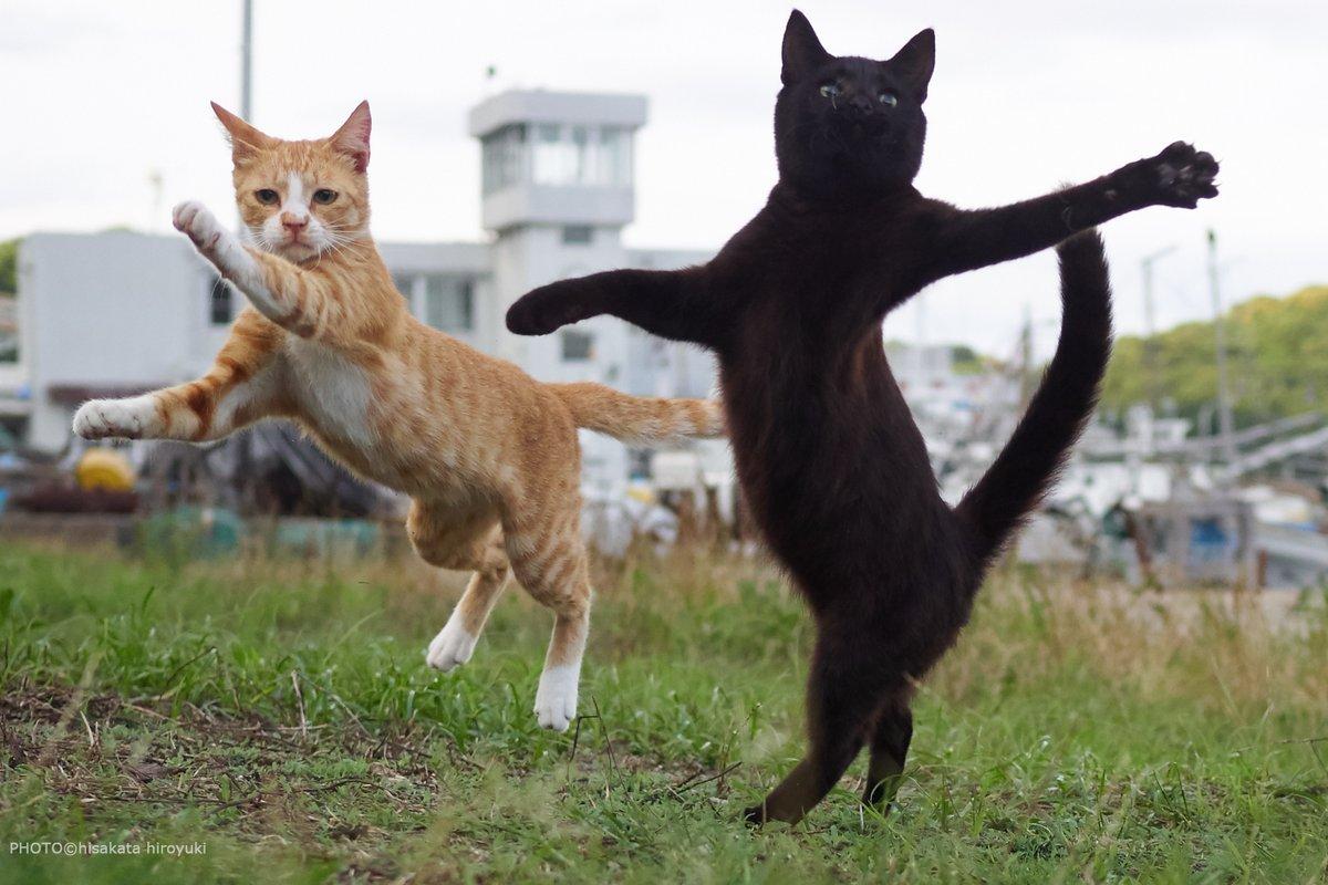 今日は猫の日だそうですね!ここで私が撮影してきた「とにかく遊びたいがためひたすら割り入って映り込んでくる黒猫」をご覧ください