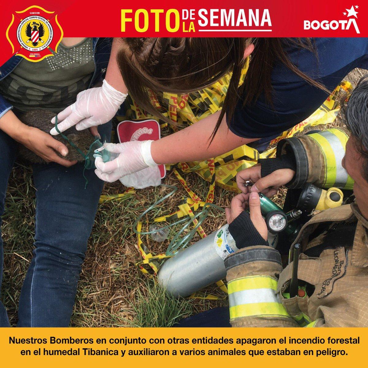 En nuestra #FotoDeLaSemana te mostramos cómo trabajamos para apagar el incendio forestal que se presentó en el Humedal Tibanica, donde rescatamos animales que estaban en peligro 🚒