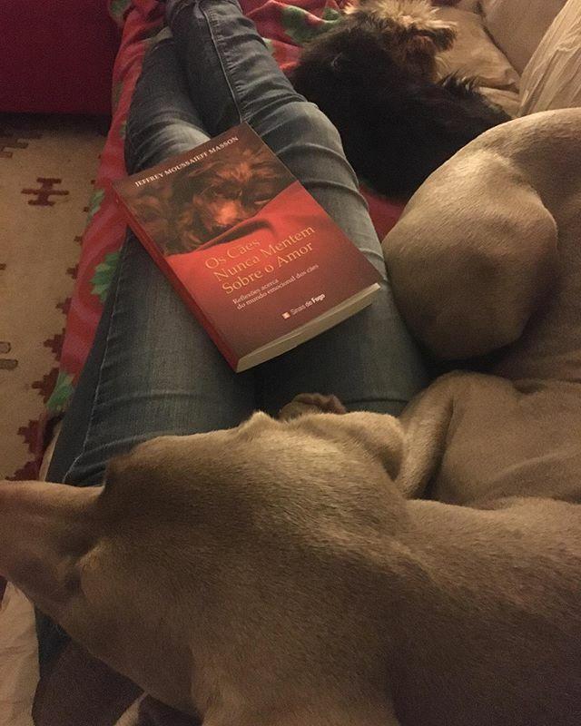 "Noites de mimo e leitura: ""Os cães nunca mentem sobre o amor"" . #nilo #braquedeweimar #yorkshire #sissi #dogoftheday #dogs #dogslife #doglover #myLove #myBestFriend #dogsofinstagram #instadog #instaweim #petstagram #weimaraner #weimaranerlove #weimaraner… https://ift.tt/39UTCCxpic.twitter.com/lKiOiYLbOT"