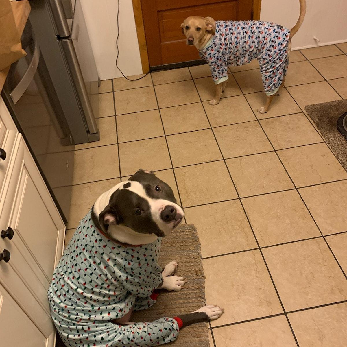 They actually like these. Lol  #merchantserviceinnovations #dog #dogs #pitbull #pitbulls #cur #yellowcur #dogslife #dogsofinstagram #dogsarefamily #dogspajamas #dogspjs #lol #funny #warm #theylikethempic.twitter.com/g8kC28lRMM