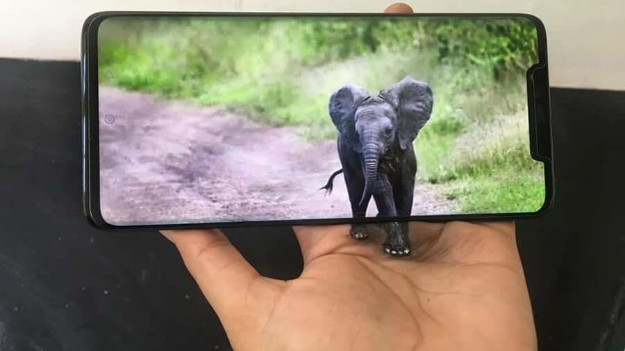 (press the link, to see the rest) #Baby #Elephant. The artist #paints part of the image on her hand and the rest is on the #iPhone. More art from Iantha Naicker, on our site =>