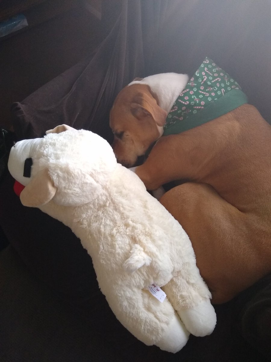 Last one I swear, this is Jasmine at Christmas with lambchop <br>http://pic.twitter.com/opwzbW8XqW