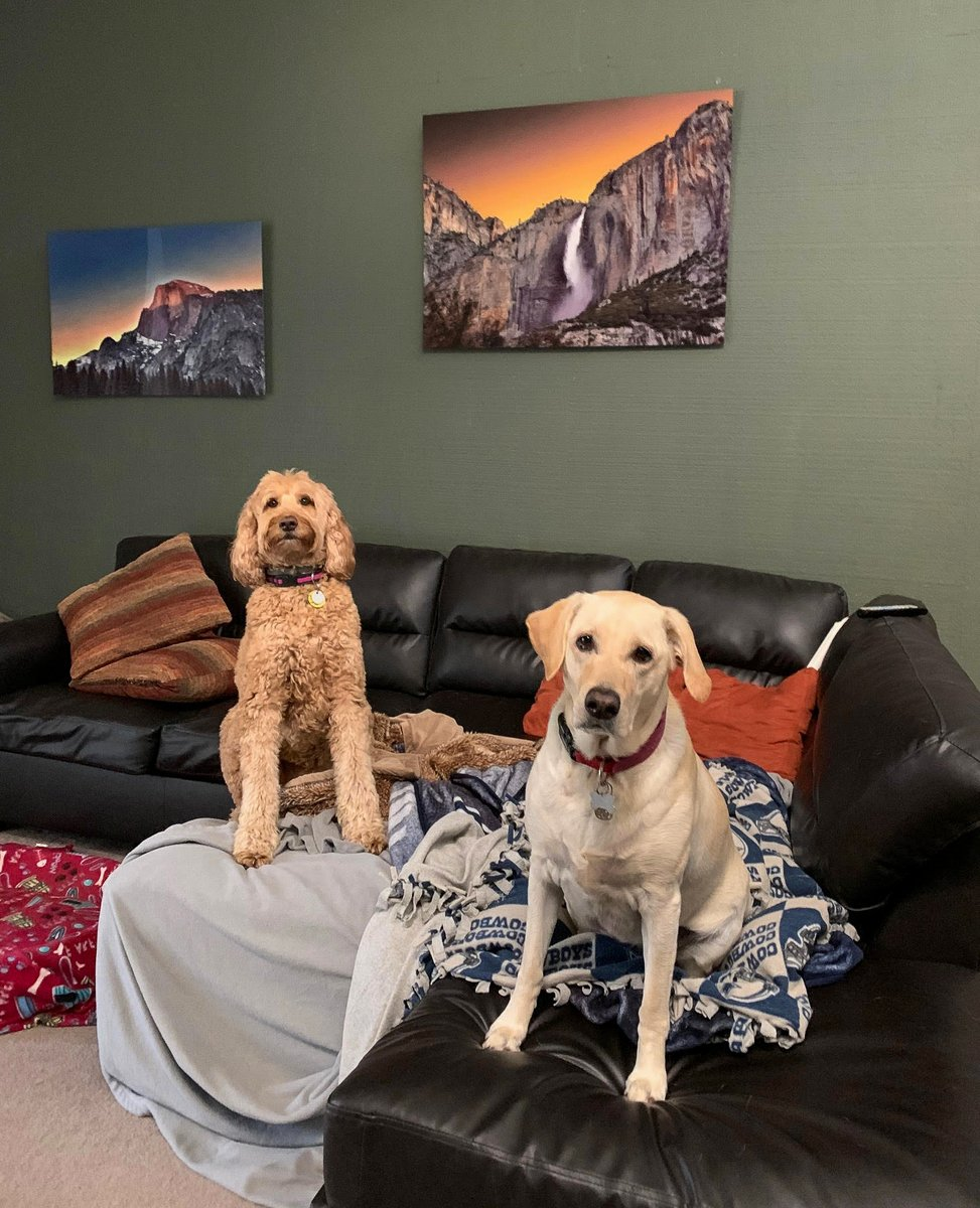 Hope everyone enjoyed National #Love Your #Pet Day :)  I was pretty lucky to enjoy a 2 for 1 special <3    #petsitter #dogsitting #bestjobever #labradoodle #Labrador #dog #dogs #labradorretriever #laughter #bestfriend #dogter #sandiego #ramona #poway #freelance #petsitting