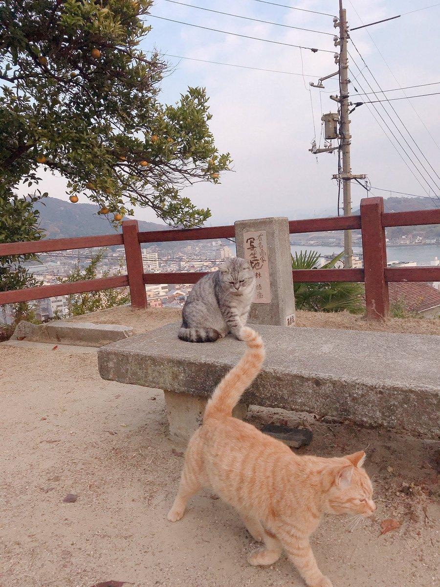 test ツイッターメディア - 尾道の猫たち🐈  #STU48 #風を待つ  #広島県 #尾道 #ねこの日 #猫の日 https://t.co/3SkArVKR7M