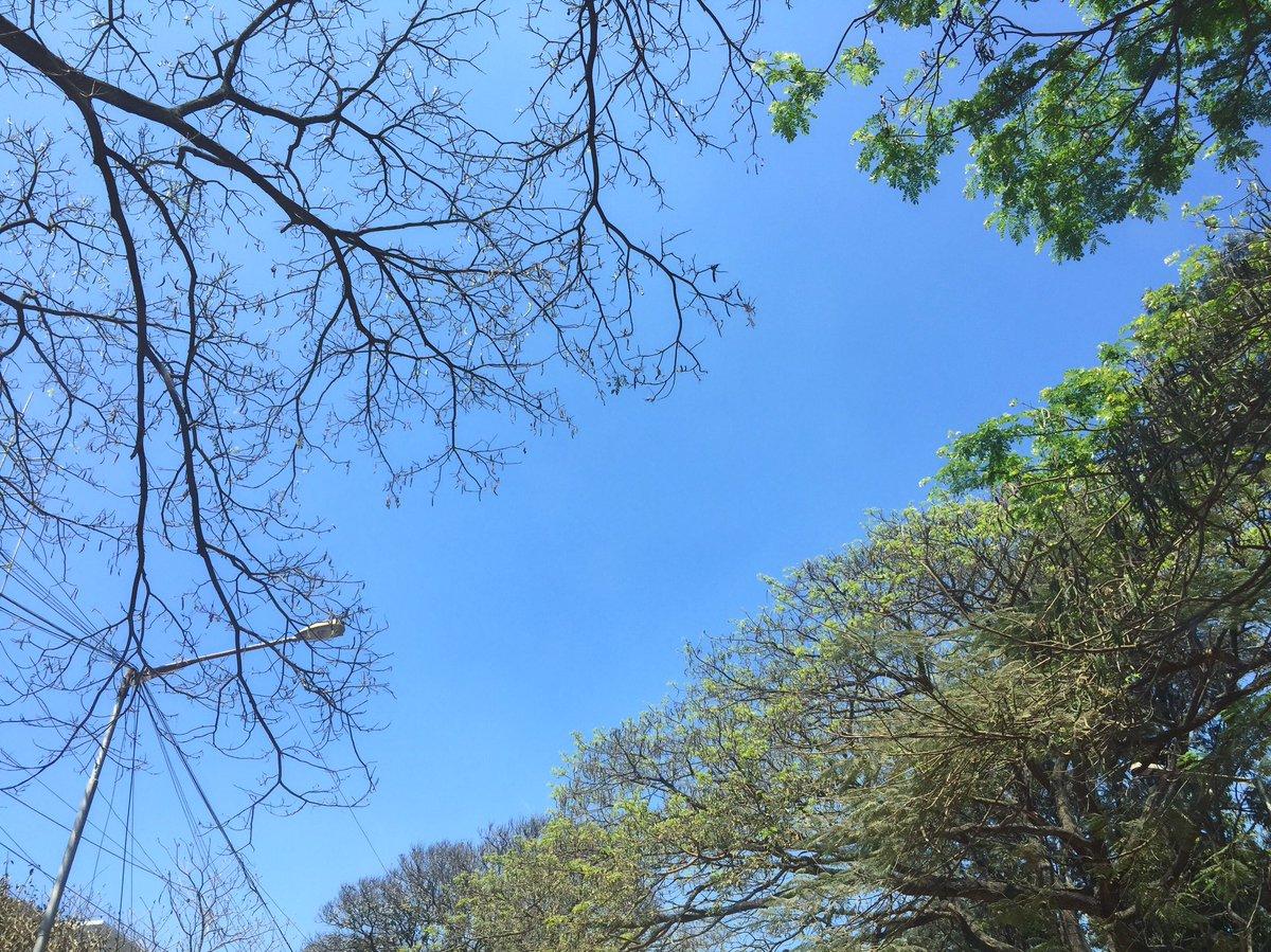 Start something new. Finish something old. #trees #nature #seasons #change